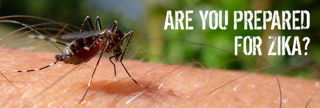 Prevention is the Best Zika Virus Treatment
